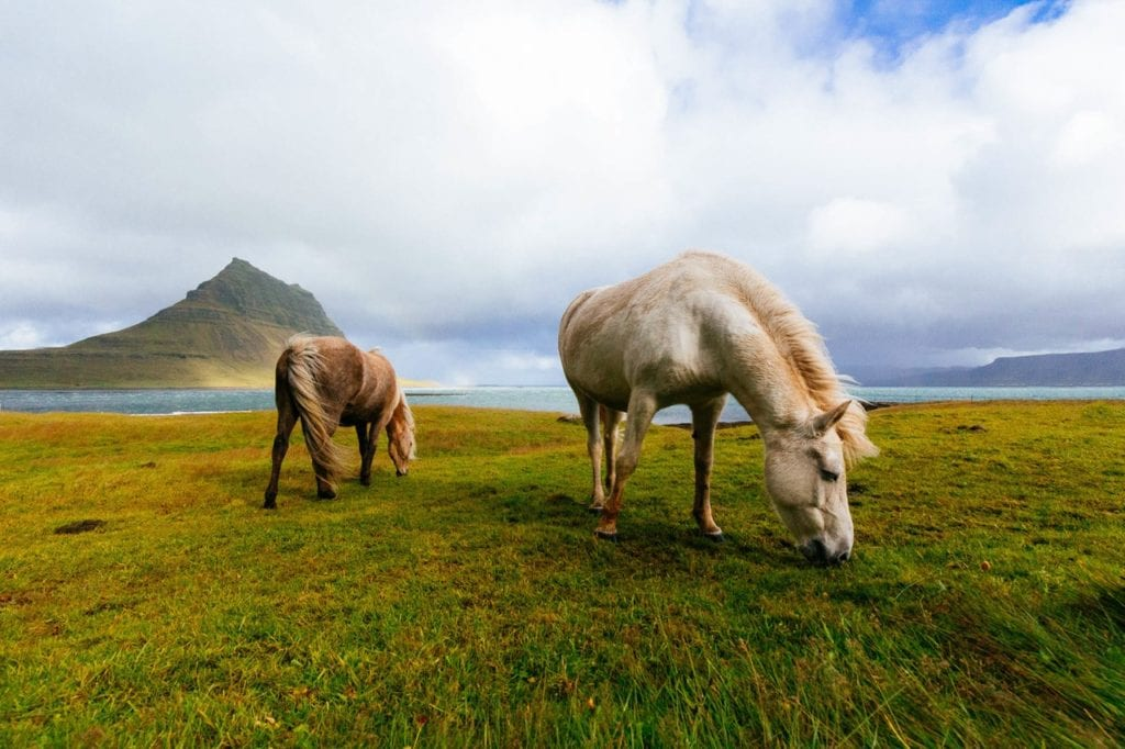 Guide gay sur l'Islande