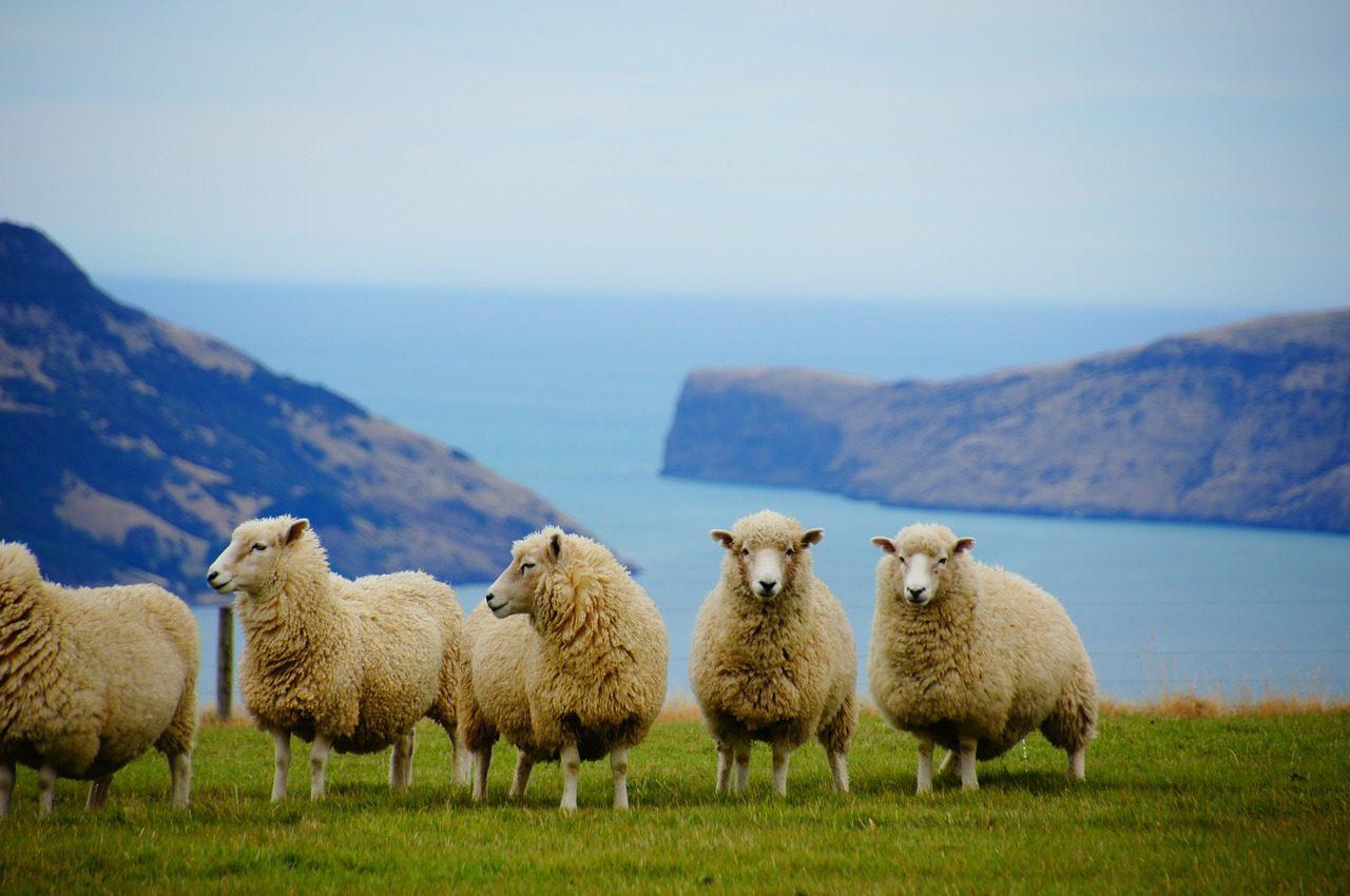 Marcher du côté sauvage de la Nouvelle-Zélande