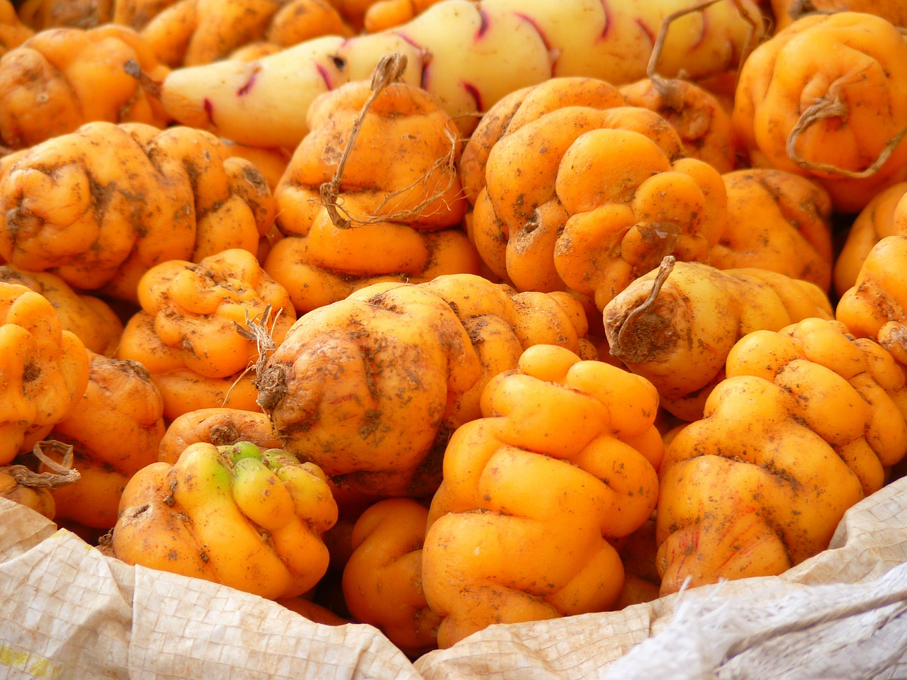 Le plaisir et la bouche - Gastronomie du Pérou