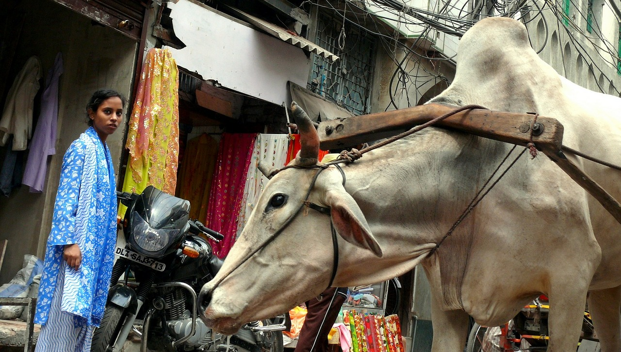 Vieux Delhi (Old Delhi)