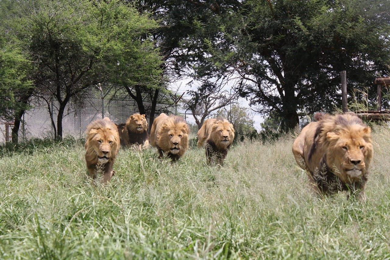 Grand Zimbabwe, Zimbabwe